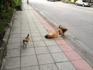 A soi dog (and her puppies! a rare sight) in Bangkok, Thailand. (Photo by Bjorn Karlman)